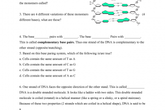 Printables Dna Worksheet structure of dna and rna worksheet 6 biological answers to in genetics category