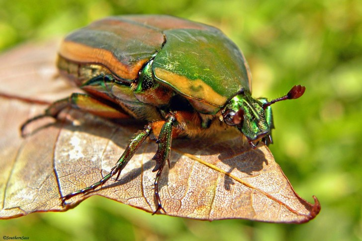 Bug , 6 Bug Or Beetle : Beetle
