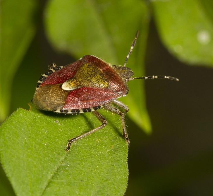 Bug , 5 Pictures Of Beetles Bugs : Beetles Bugs