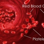 Blood Platelets , 8 Platelets Science Photo In Cell Category
