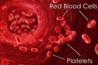 Blood Platelets in Cell