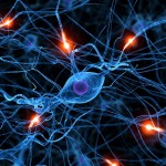 Brain Synapse Wallpaper , 5 Brains Synapse Neurons Wallpaper In Brain Category