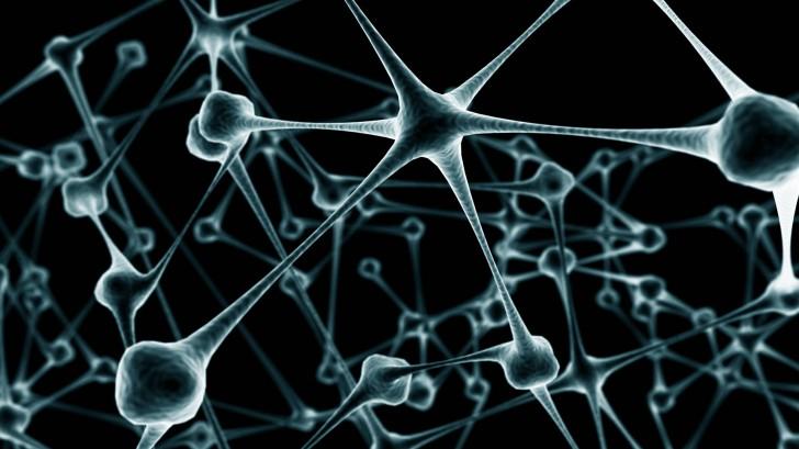Brain , 6 Brain Wallpaper Pictures : Brain Wallpaper