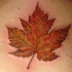 Canadian Maple Leaf Tattoo , 6 Maple Leaf Tattoos In Human Category