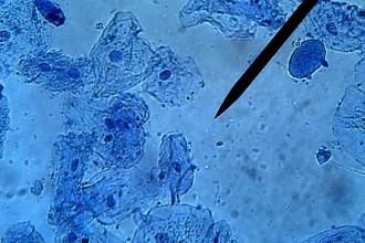 Cell Biology , 6 Animal Cell Microscope In Cell Category