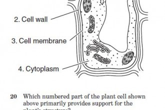 Cell Structure Test Questions in Plants