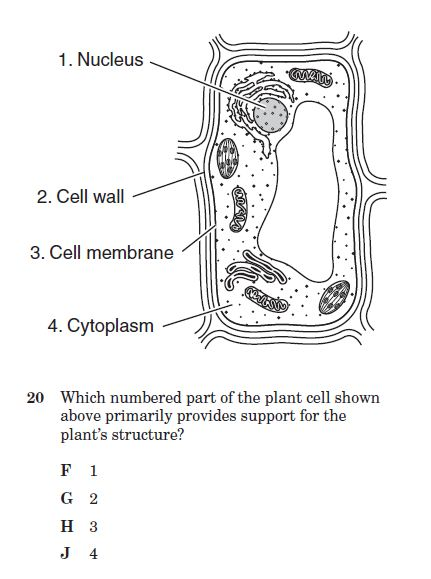 Cell Structure Test Questions