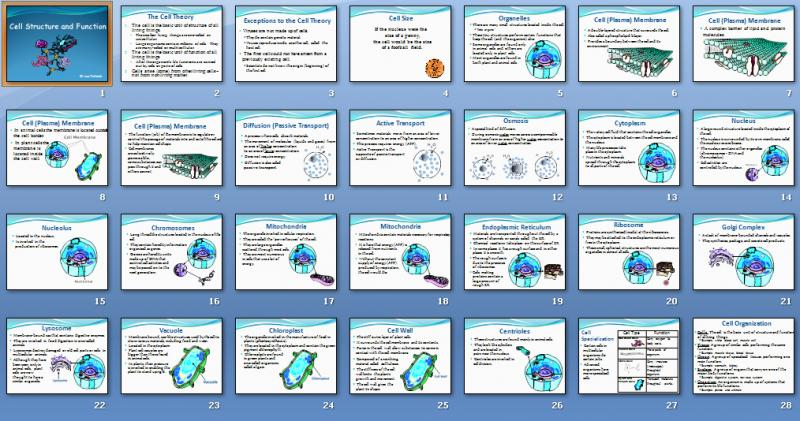 cell structure and functions Cellular structure and function projects five project options 1) cell analogies book (individually) 2) 3d cell model (in pairs or individually.