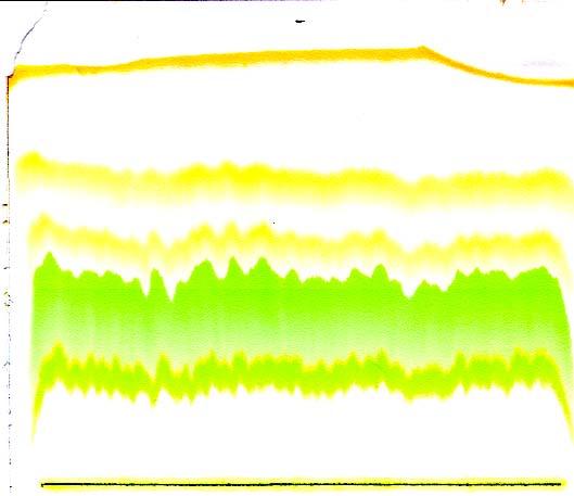 Scientific data , 6 Leaf Pigment Chromatography : Chromatography Photosynthetic Pigments