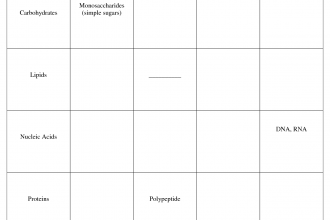 Classes Of Organic Macromolecules , 6 Organic Macromolecules Worksheet In Scientific data Category