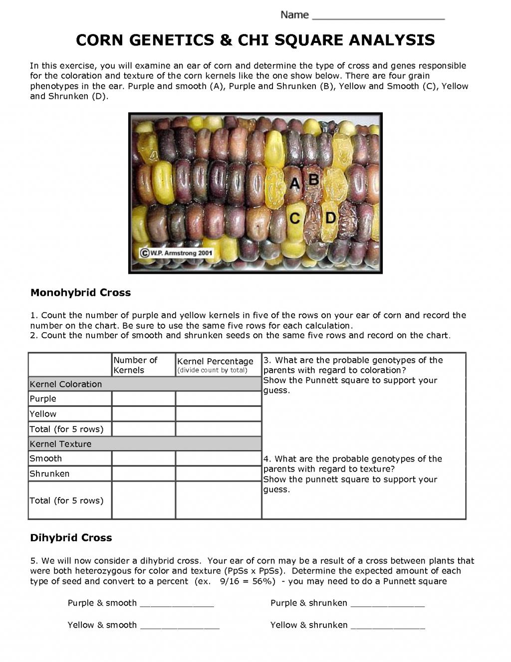 Corn Genetics and Chi Square Analysis