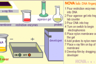 DNA Fingerprinting , 5 Dna Fingerprinting Nova In Genetics Category