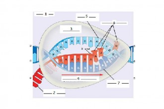 DNA RNA Protein Synthesis , 7 Rna Quiz In Cell Category