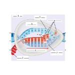 DNA RNA Protein Synthesis , 5 Protein Synthesis Quiz In Genetics Category