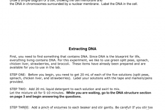 DNA Extraction From Cheek Cells Protocol , 6 Why Is Dna Extraction Important In Genetics Category