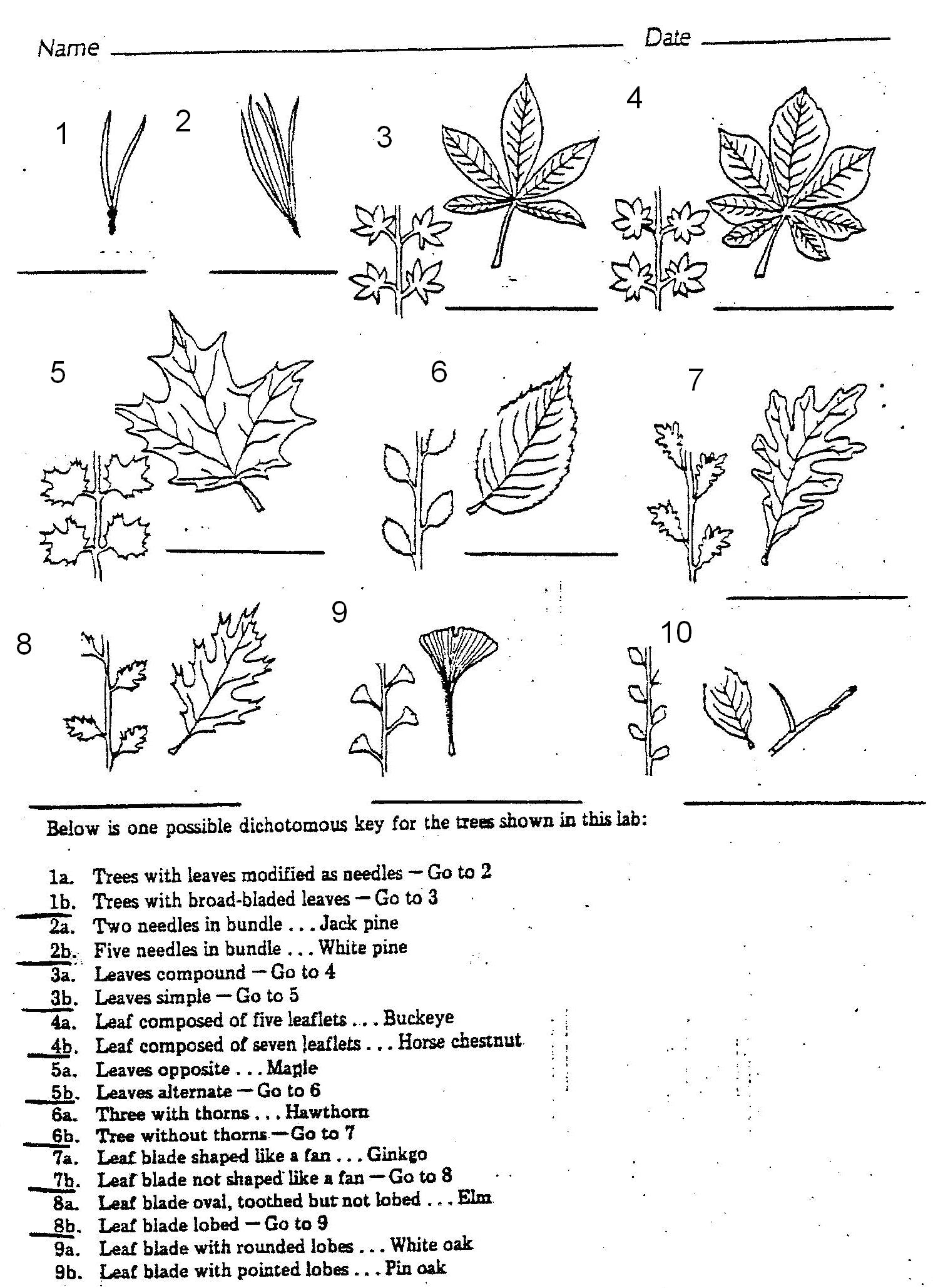 Dorable Leaf Anatomy Worksheet Illustration - Anatomy Ideas - yunoki ...