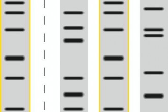 Dna Fingerprinting Crime Scene , 5 Dna Fingerprinting Nova In Genetics Category