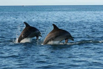 Dolphin Habitat , 6 Bottlenose Dolphin Facts For Kids In Mammalia Category