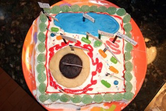 Edible Cell Project , 5 Edible Plant Cell Project Ideas In Cell Category