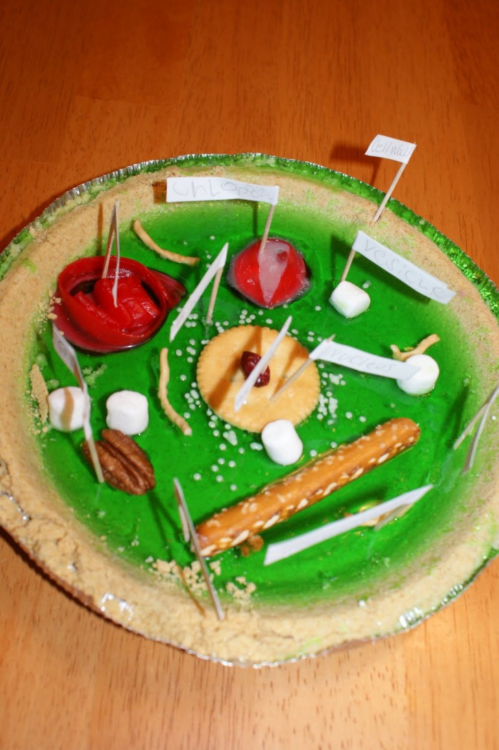Cell , 5 Edible Plant Cell Project Ideas : Edible Plant Cell