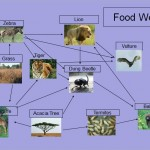 FoodWeb , 6 African Savanna Food Webs In Ecosystem Category