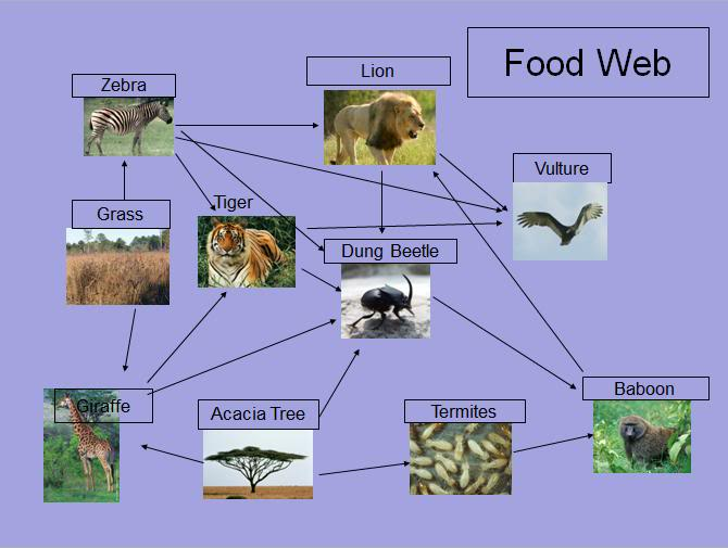 FoodWeb : 6 African Savanna Food Webs | Biological Science ...