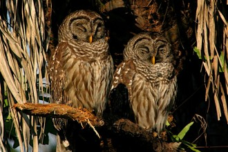 Fun Facts About Owls , 6 Owl Interesting Facts In Birds Category