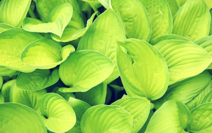 Plants , 7 Green Leaf Landscaping : Green Leaf Wallpaper