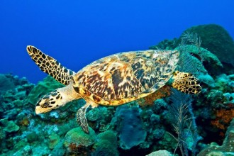 Hawksbill Sea Turtle in Plants