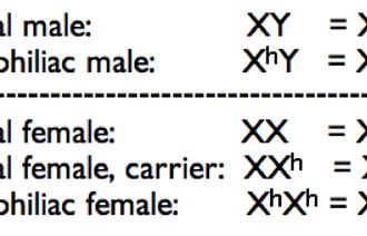 Hemophilia Genotypes , 7 Hemophilia Punnett Square In Genetics Category