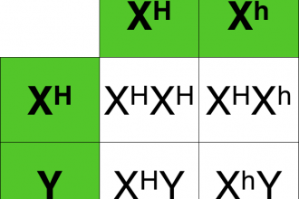 Hemophilia Punnett Square Tables , 7 Hemophilia Punnett Square In Genetics Category