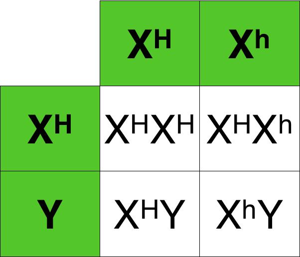 Genetics , 7 Hemophilia Punnett Square : Hemophilia Punnett Square Tables