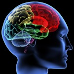Human brain wallpaper , 6 Brain Wallpaper Pictures In Brain Category