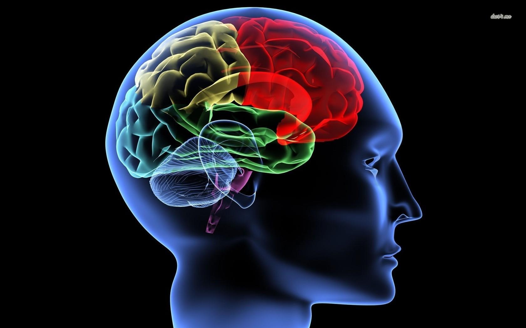 human brain wallpaper 6 brain wallpaper pictures