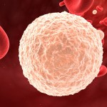 Humans White Blood Cell , 8 White Blood Cells Pictures In Cell Category