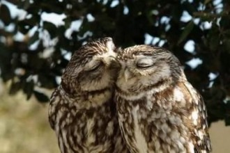 Interesting facts about Owl in Scientific data