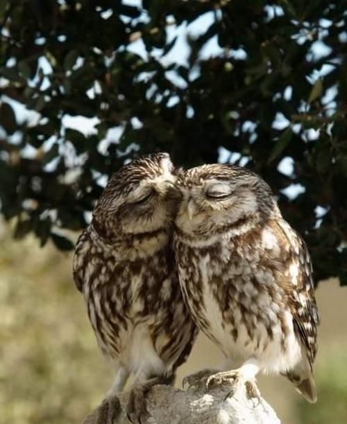 Birds , 6 Owl Interesting Facts : Interesting Facts About Owl