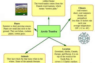 Biome , 6 Tundra Biome Facts : Kidspiration Organizer Tundra