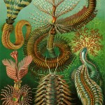 Kinds of Marine invertebrates , 9 Marine Invertebrates In Invertebrates Category