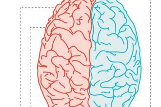 LEFT BRAIN Or RIGHT BRAIN , 8 Left Right Brain Characteristics In Brain Category