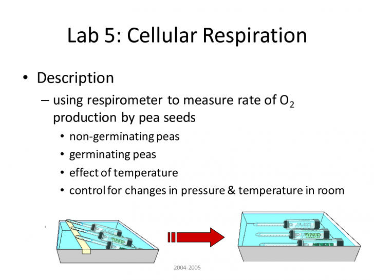 Cell , 6 Lab Bench Cellular Respiration : Lab 5 Cellular Respiration