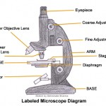 Labeled microscope diagram , 5 Labeled Parts Of A Microscope In Cell Category