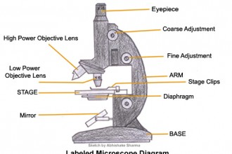 Cell , 5 Labeled Parts Of A Microscope : Labeled microscope diagram
