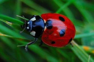 Ladybird Beetle , 6 Photos Of Lady Bug Beetle In Bug Category