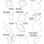 Leaf Shapes , 7 Leaf Tree Id Key Review In Plants Category