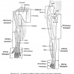Learn About The Human Anatomy and Physiology , 8 Physiology Class In Organ Category