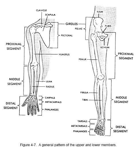 Organ , 8 Physiology Class : Learn About The Human Anatomy And Physiology