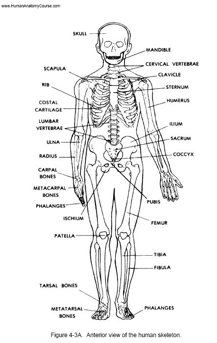 Organ , 8 Physiology Class : Learn About The Human Body