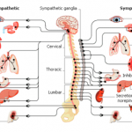 Learning Physiology , 8 Physiology Class In Organ Category