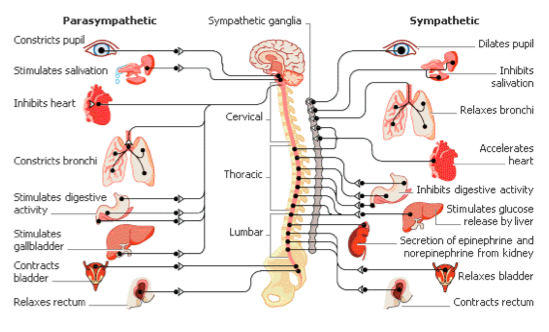 Organ , 8 Physiology Class : Learning Physiology